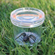 Insektsglass - lupe i lokket
