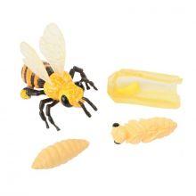 Livssyklus: Fra egg til insekt - Honningbie