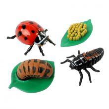 Livssyklus: Fra egg til insekt - Marihøne