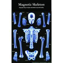 Magnetisk skjelett