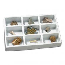 Min samling av fossiler