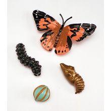 Livssyklus: Fra egg til insekt - Sommerfugl