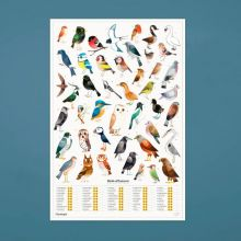 Plakat 50 x 70 cm. - 45 fugler