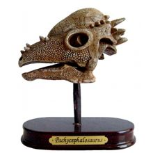 Utgravingssett - Pachycephalosaurus
